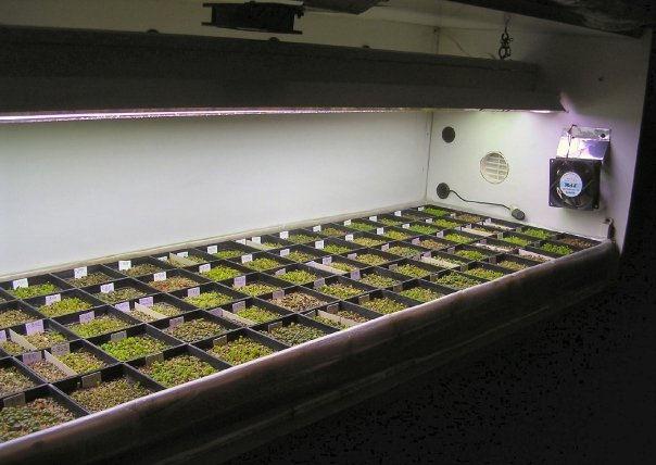 Il germinatoio per la semina invernale delle piante grasse