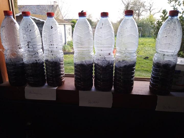 des mini serres avec des bouteilles
