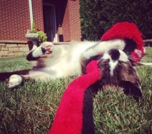 el juego en la vida del gato