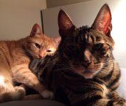 presentaciones entre gatos
