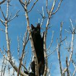 gato libre disfruta arbol