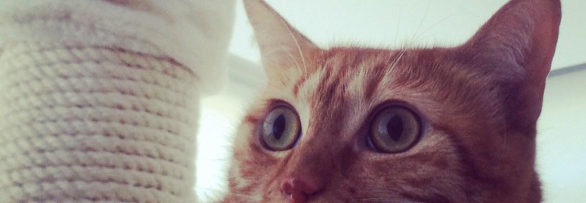 ¿Por qué mi gato hace pis fuera del arenero?