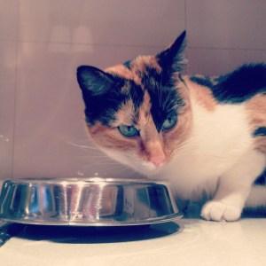 gato con hambre