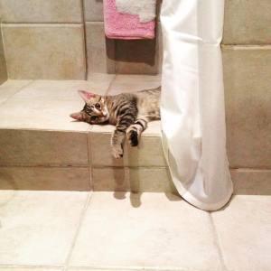 gatos que rompen todo