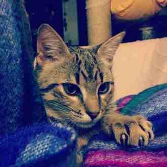 el hijo de mi gata