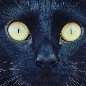 con ojos de gato
