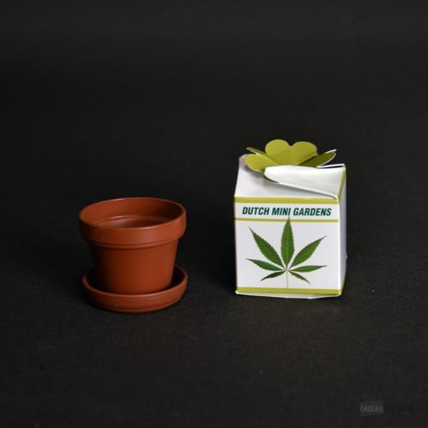 Chanvre Faire Pousser With Kit Pour Faire Pousser Du Cannabis