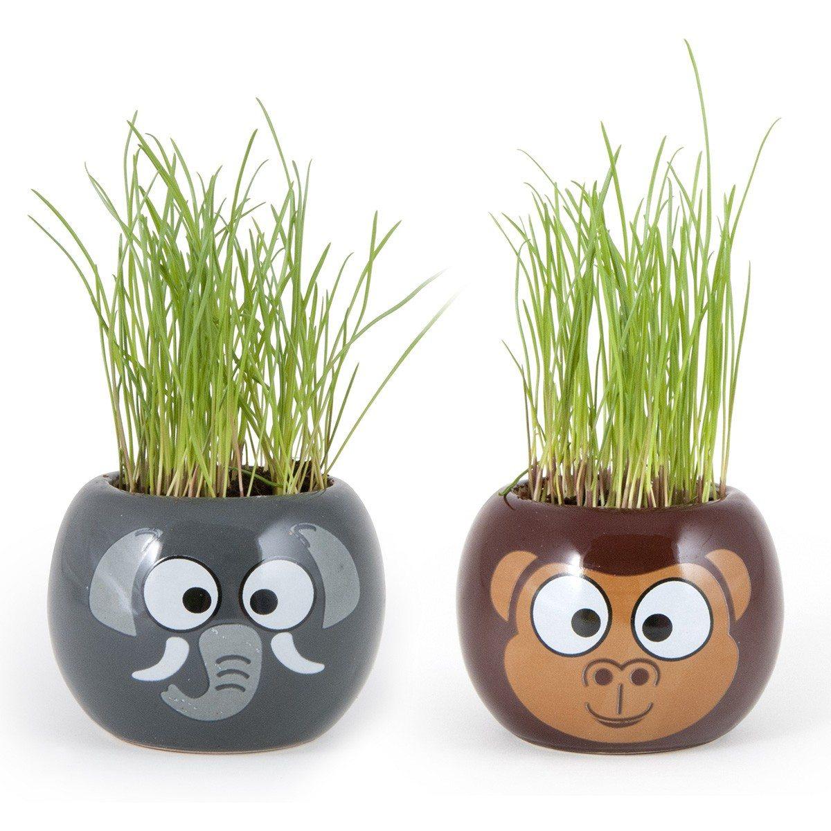 Klein plantje met dierenafbeelding  Cadeautjesnl