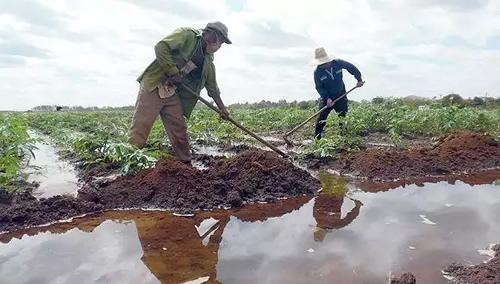 Ministerio de Agricultura diseña estrategia para perfeccionamiento empresarial  ante la Tarea Ordenamiento