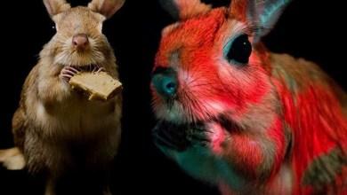 Photo of Confirmaron un nuevo animal que brilla en la oscuridad