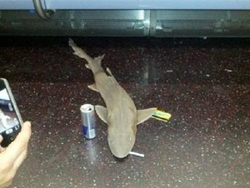Los usuarios aprovecharon para mofarse del descubrimiento del tiburón