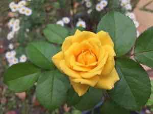 相続と指導霊 | カレスティア