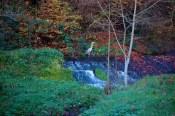 Mullerthal cascade