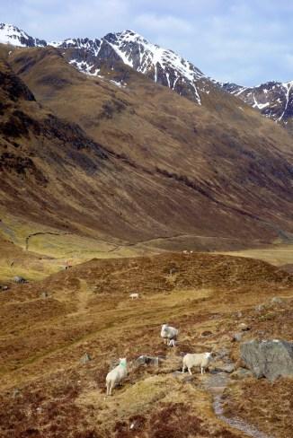 Hiking Schotland 2485
