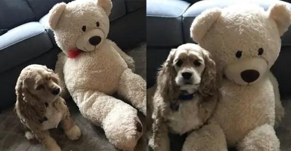 """Cão se recusa a abandonar """"melhor amigo"""" durante o banho"""