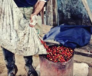 familia productora, Caficultores,agricultores, Café Las Margaritas Especial Tipo Exportación, Vendedores de Café Colombiano, café origen