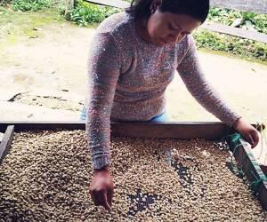 Mujeres emprendedoras, familia productora, Caficultores,agricultores, Café Las Margaritas Especial Tipo Exportación, Vendedores de Café Colombiano, café origen