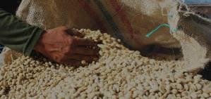 Café las margaritas, café pergamino, café especial, café de origen finca, café de especialidad, colombiano