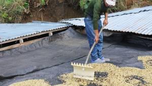 Proceso del café, Caficultores, agricultores, Café Las Margaritas Especial Tipo Exportación, Vendedores de Café Colombiano, café origen