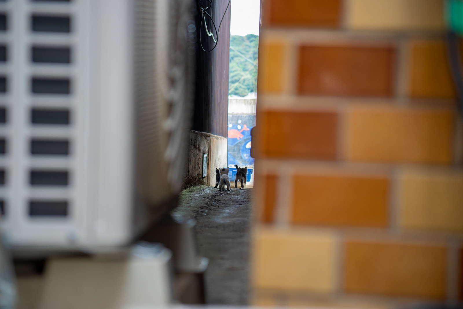 攝影師捕捉日本小巷內的貓咪蹤跡 – 珈琲成影 – 空間攝影   住宅攝影   商業攝影   室內設計作品集