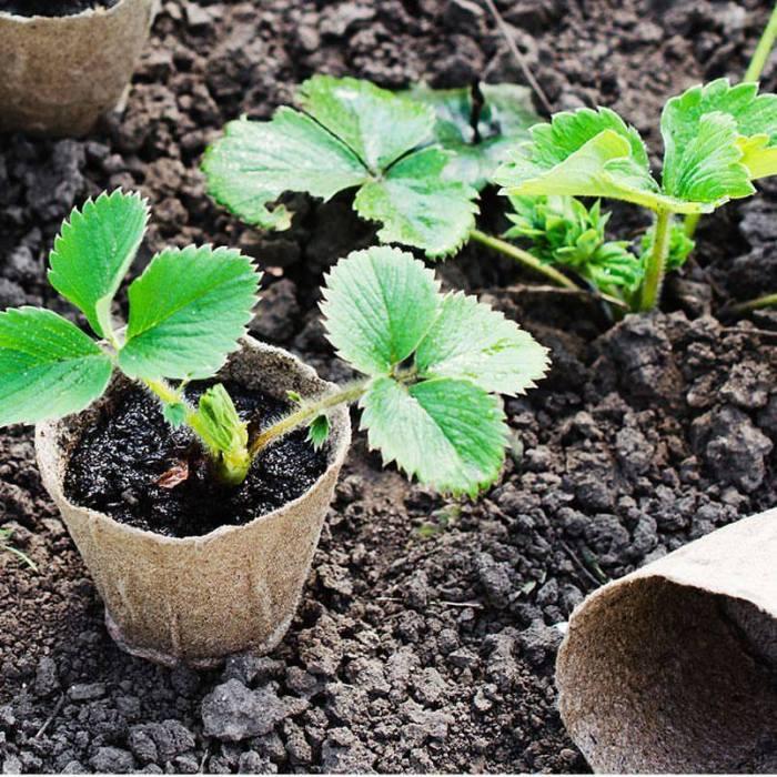 macetas plantadas de plantea en verde