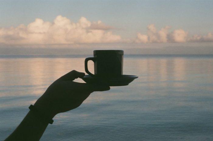 taza de té, camellia sinensis