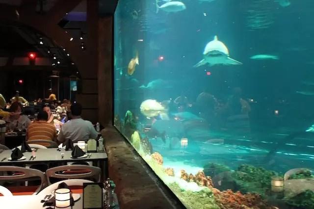 Sharks Underwater Grill 3