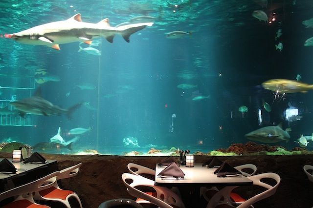 A mesa do  Sharks Underwater Grill  - restaurante do Sea World