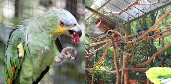Araras Parque das Aves