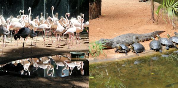 Parque das Aves Foz 2