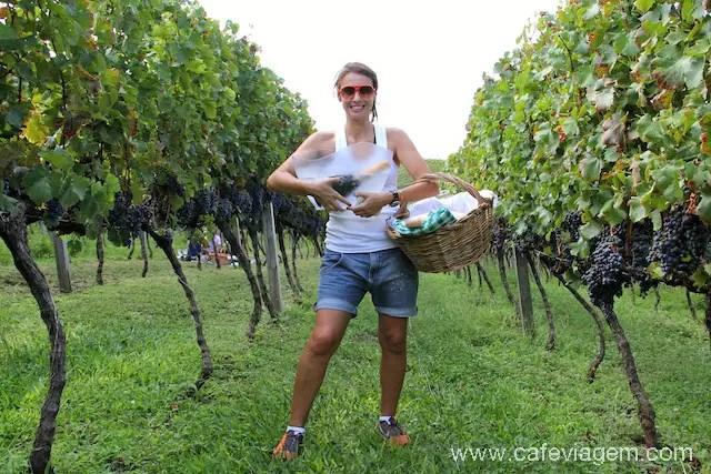 feliz da vida com o pic-nic nos Vinhedos, horas antes da colheita das uvas