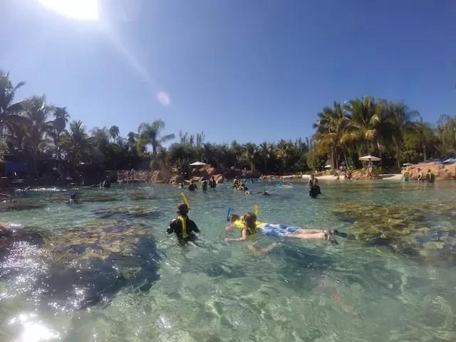 Galera mergulhando na piscina das raias e peixes
