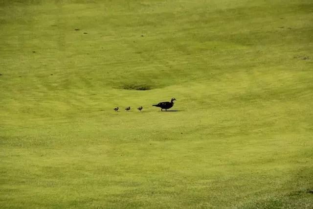 da mesa dá para ver até a família de patos mais elegante das redondezas!