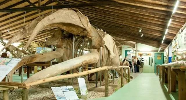MUSEO DEL MAR Ballena y Pared de los Cangrejos