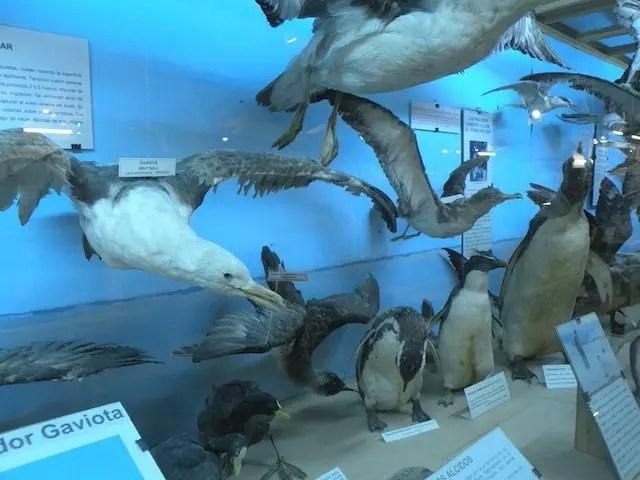 Museu do Mar Punta del Este (10)
