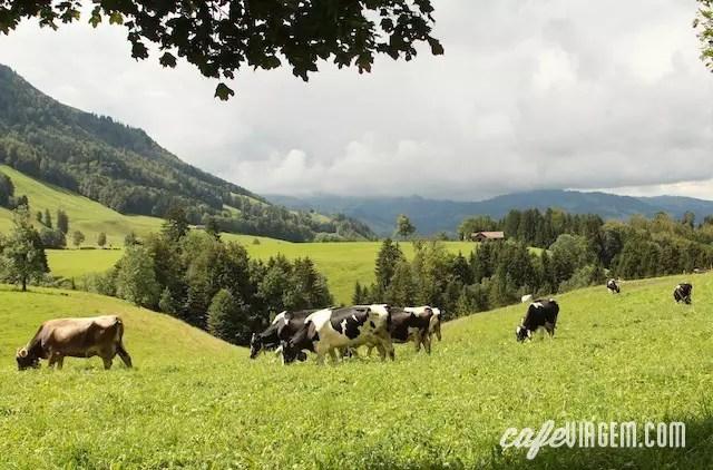 Charmey Swiss queijos (63)