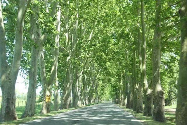 Na estrada para Carmelo na Ruta 21