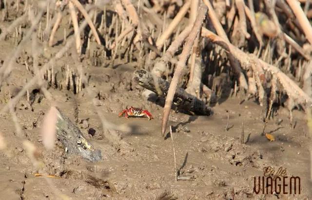 E o registro dele voltando para o seu habitat depois de ser fotografado