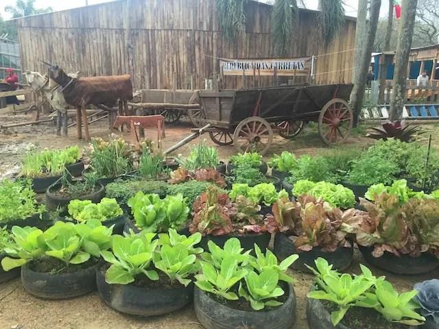 Horta do Piquete da Fazendinha