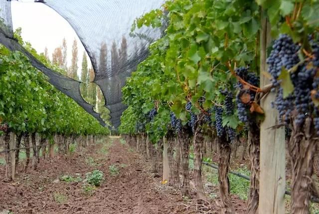 vinhos Susana Balbo Mendoza