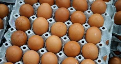 Fipronil,  lieve contaminazione sulle uova di un allevamento del cagliaritano