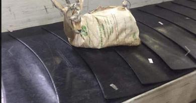 gazzella-tripoli