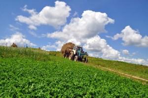 Agricoltura: Argea diventa organismo pagatore per l'erogazione degli aiuti