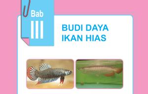 Budi Daya Ikan Hias