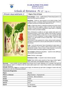 Arum maculatum fg. 1