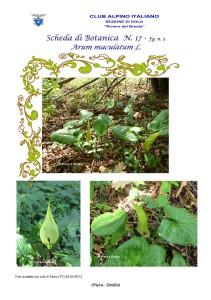 Arum maculatum fg. 3