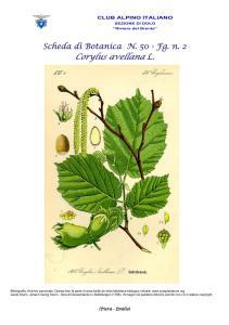 Scheda di Botanica n. 50 Corylus avellana L. fg. 2 - Piera, Emilio