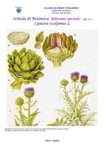 Scheda di Botanica Edizione Speciale N.53_bis fg. 2 Cynara scolymus - Piera, Emilio