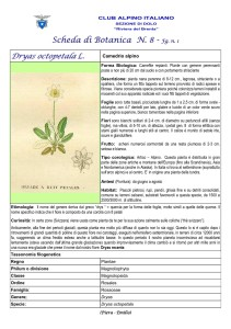 Dryas octopetala fg. 1