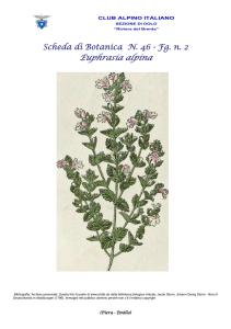 Scheda di Botanica n. 46 Euphrasia alpina fg. 2 - Piera, Emilio